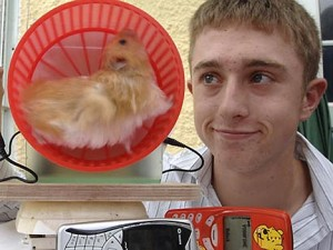 hamster chargeur de tlphone