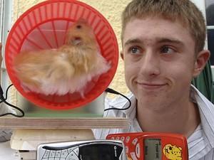 hamster chargeur de téléphone