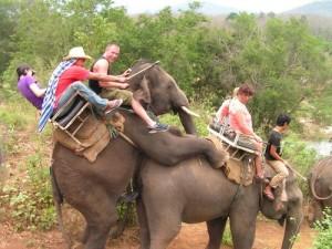 éléphant inde repodruction touriste