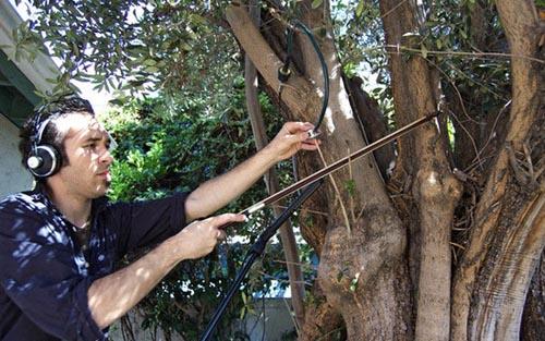 arbre en musique