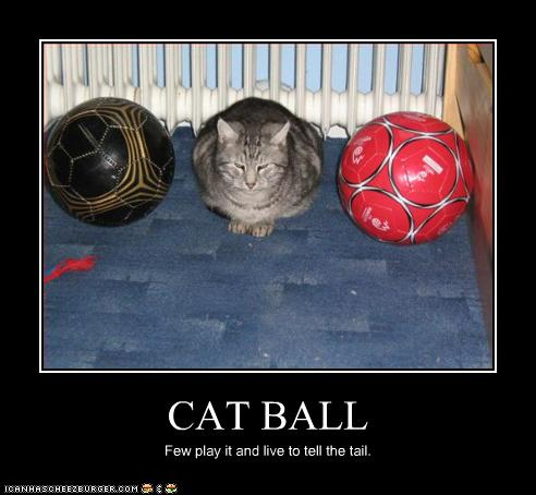 chat-balle