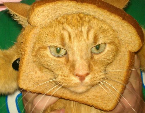 toast chat sites Toast art refers to the practice of printing a stencil design or pattern on sliced bread by toasting it to varying shades of brown with a blow torch.