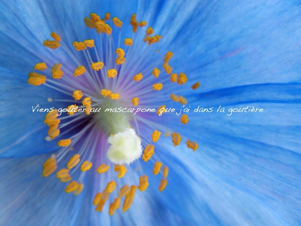 Message for Livraison fleurs avec message