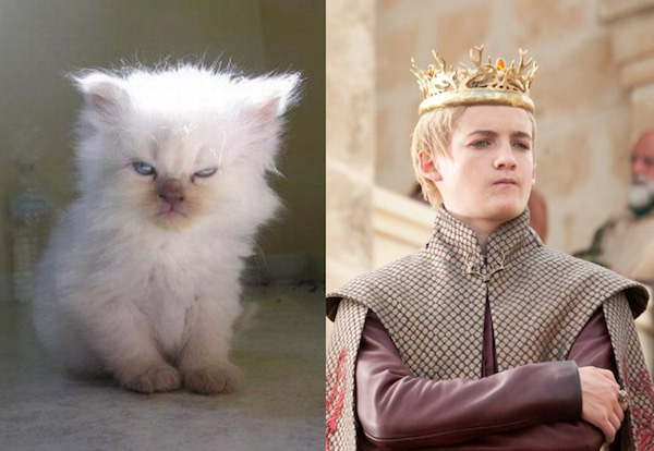 game-of-thrones-chat