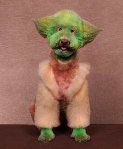 chien-yoda