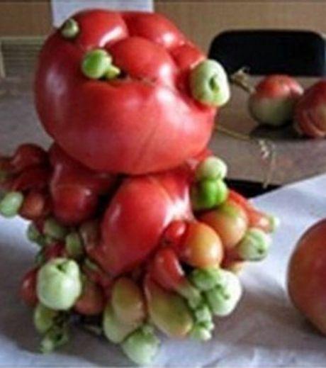 fruit-radiation-14