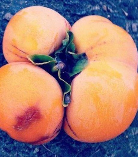 fruit-radiation-7