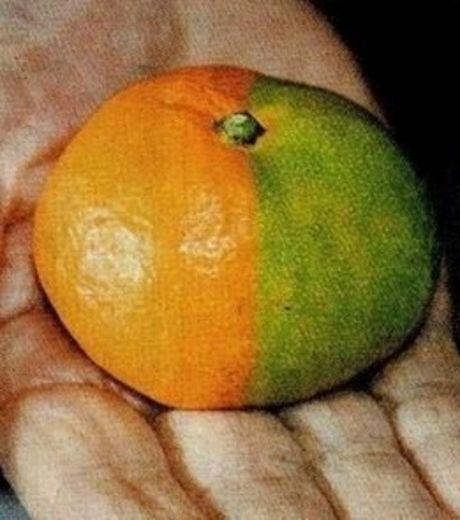 fruit-radiation-8