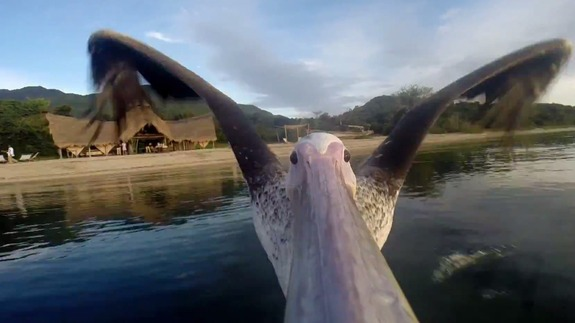 pelican-gopro-voyage