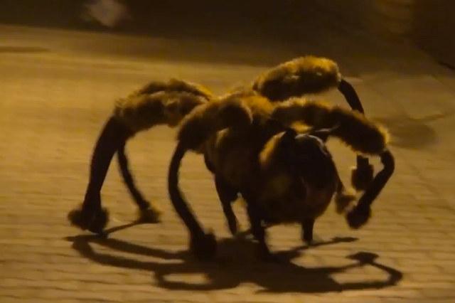chien-costume-araignée