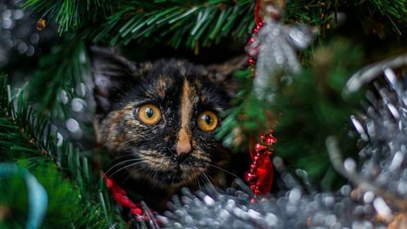 chat-arbre-noel